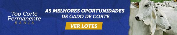 Top Corte Permanente Bahia - As melhores oportunidades de gado de corte - Pequena